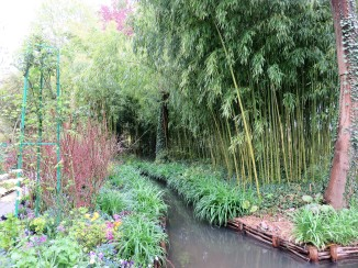 Stream through the bamboos